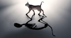 catandskeleton